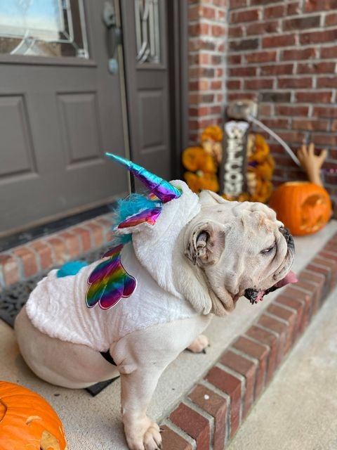 Pet Category: Numbers, the Unicorn