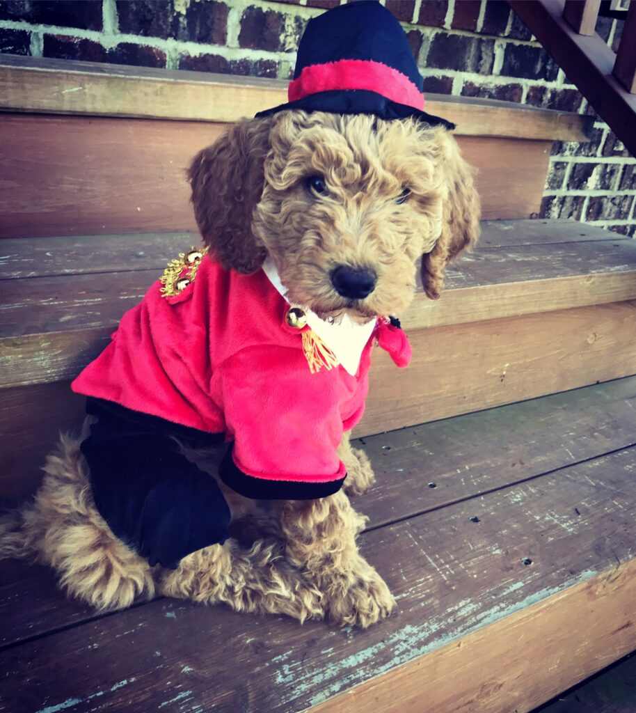 Sawyer, the Dog